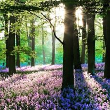 FOREST WITH PINK FLOWERS