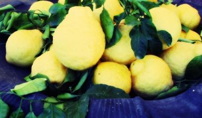 Giant lemons in Naples, Italy 2015