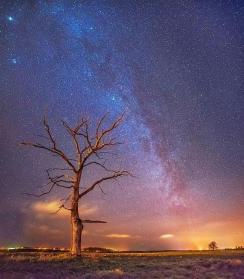 TREE AND GALAXY